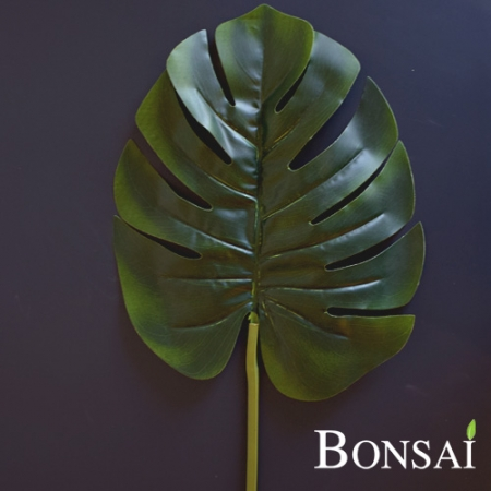 Monstera list 70
