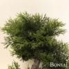 Umetni bonsai 40cm v lončku