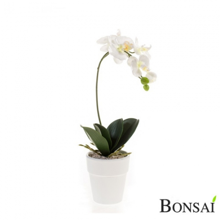 Bela orhideja v belem lončku 40 cm
