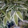Umetno drevo Fikus Benjamin 125 cm