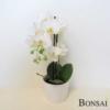 Orhideja bela - aranžma 50 x2