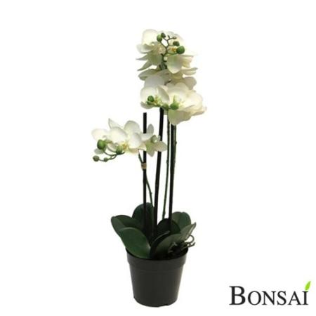 Orhideja bela - aranžma 60 x3