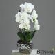 Orhideja bela-krem 50cm v srebrni vazi