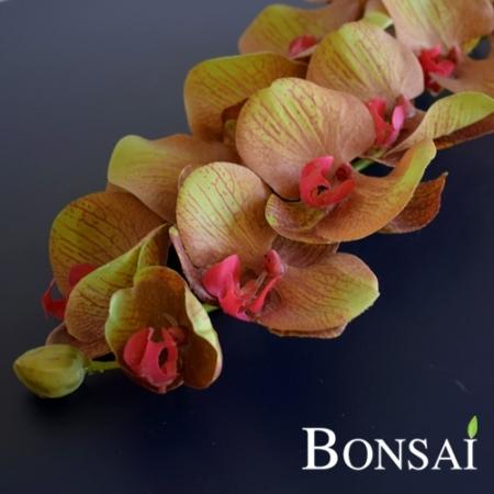 Orhideja veja 97 cm muave- zelene barve