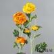 Ranunkula 60cm oranžno-rumena