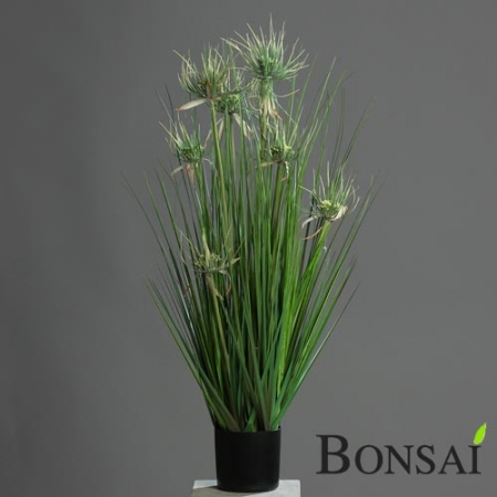 Trava 80cm v lončku s cvetovi