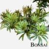 Bonsai 55 cm v keramični rjavi posod