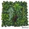 Zelene stene Lovorikovec 50 x 50 cm