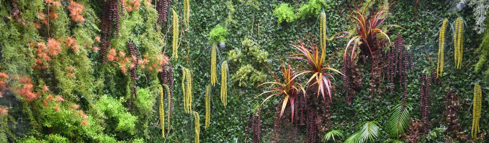 zelena stena zeleni zid green wall
