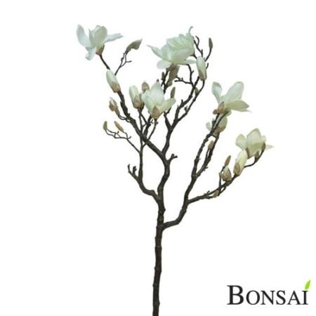Magnolija veja Gigantus 125 cm