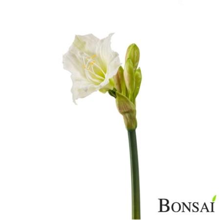Amarilis 56 cm bele barve