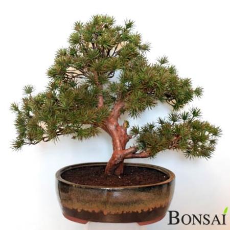 Umetni Bonsai 50 cm