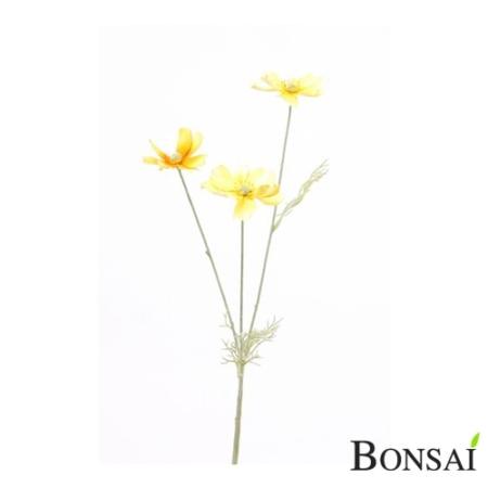 Kozmeja rumena 50 cm