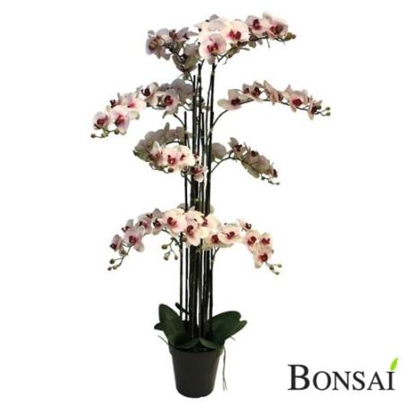 Orhideja roza aranžma RT 140 cm
