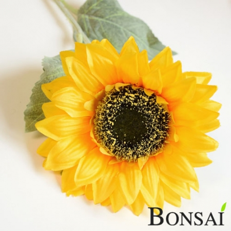Sončnica 60 cm