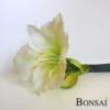 Amarilis 56 cm bele barve - naraven otip