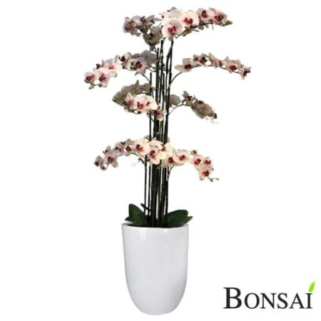 Orhideja belo- roza aranžma RT 140 cm