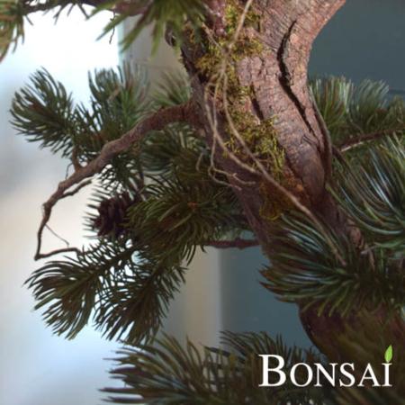 Bonsai 135 cm v posodi