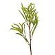 Amarant zelen 65cm
