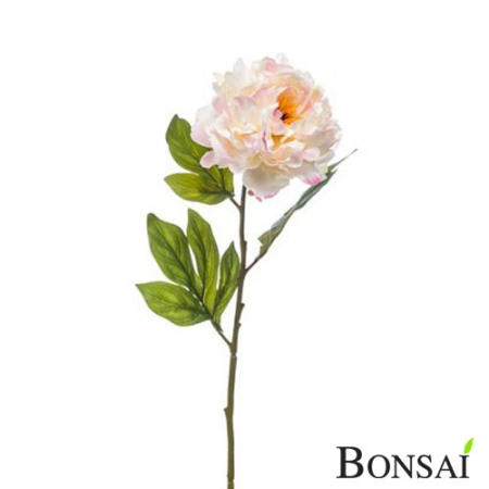 Peonija veja 78 cm roza