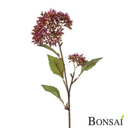 Sedum Homolica roža 60 cm vijolična