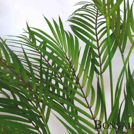 Umetna palma Areka 120 cm
