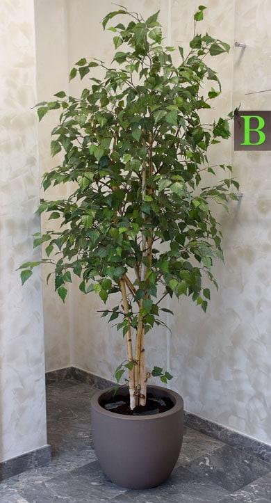 umetna drevesa - umetna breza by Bonsai Trzin