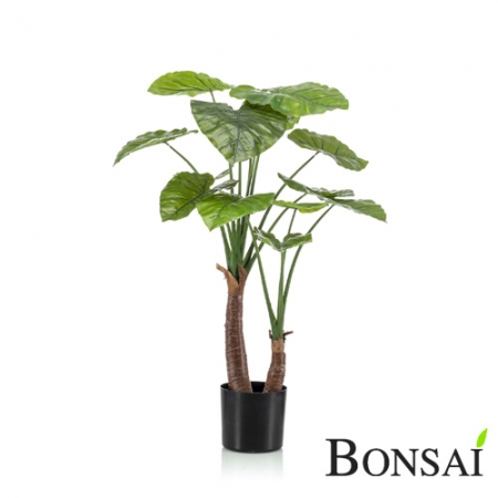 Alokazija rastlina 111cm