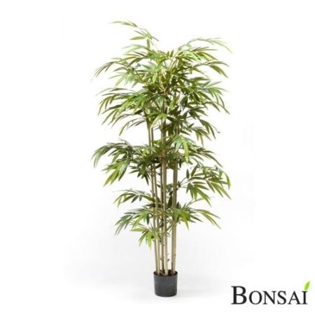 Bambus 150 cm x7