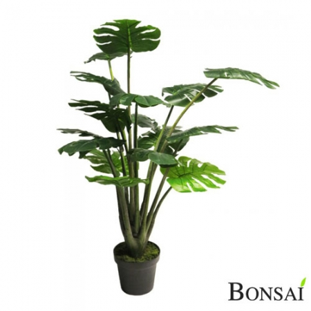 Monstera 120 cm Madagaskar