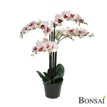 Orhideja 60 cm x5 Belo- roza