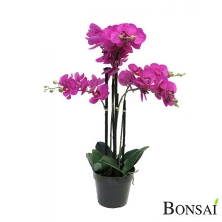 Orhideja v lončku 60 cm x 5 roza
