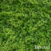 Zeleni panel Zelenolistnati mešan 50 x 50 cm