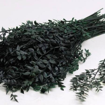 Naraven stabiliziran Ruscus - veja