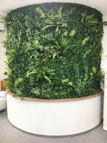 zelena stena green wall Bonsai