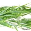 Plezalka trava z UV zaščito 80cm