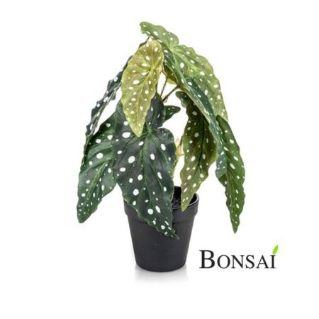 Umetna Begonia Maculata v lončku 30cm