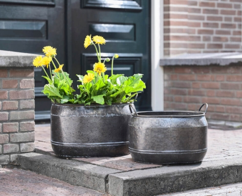 pocinkani cvetlični lonci Bonsai