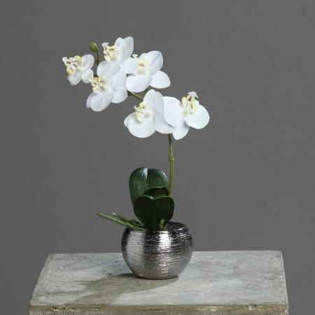 Orhideja bela v srebrnem lončku 25