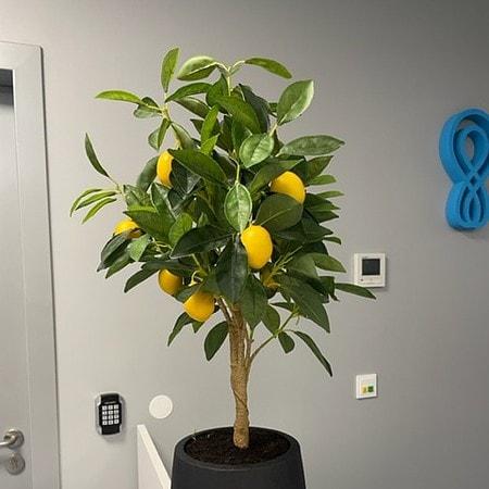Umetna limona v lončku