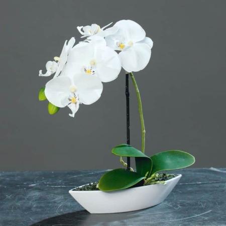 umetna orhideja bela v lončku