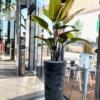 Umetne rastline - Strelicija rajska ptica