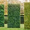 Zelene stene Bonsai