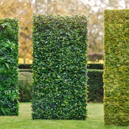 Zelene stene - žive meje