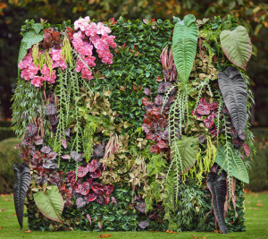 Zelene stene BONSAI dekorativne rastline