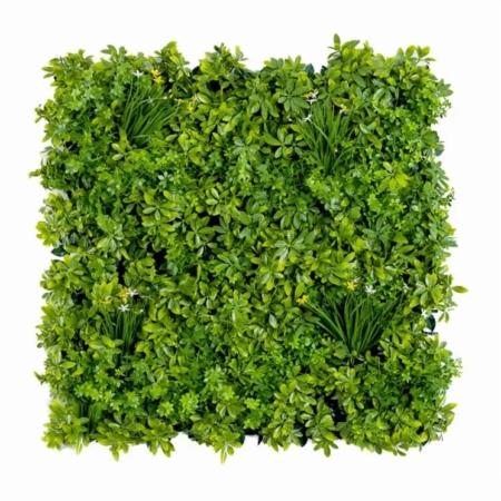 Zelena stena Šeflera 100 x 100 cm