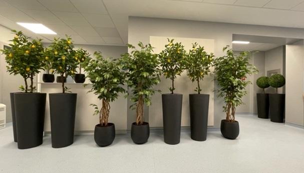 umetne rastline by Bonsai - reference